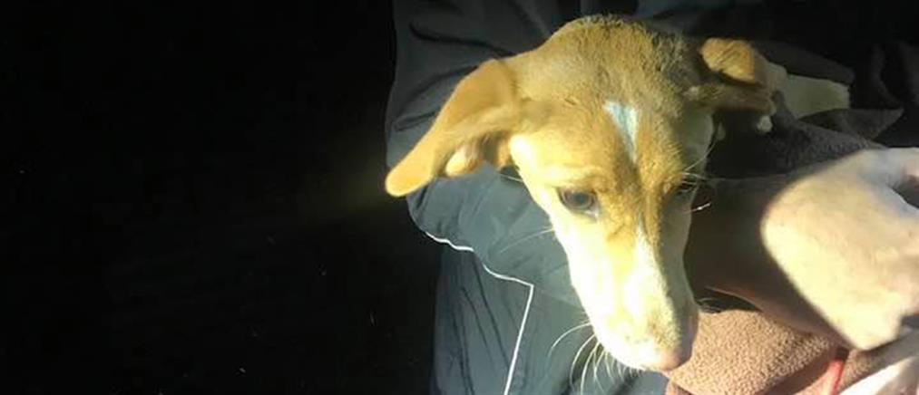 Κοζάνη: Σκύλος διασώθηκε από πηγάδι (εικόνες)
