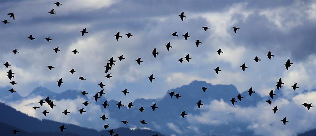 Εκατόμβη νεκρών πουλιών από βεγγαλικά (εικόνες)