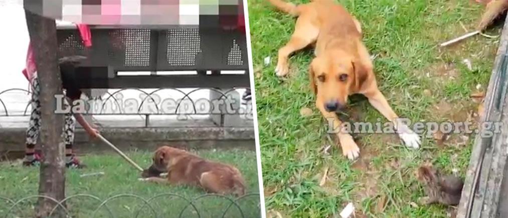 Κτηνωδία: ανήλικοι έδωσαν νεογέννητο γατάκι σε σκύλο για να το φάει! (εικόνες)