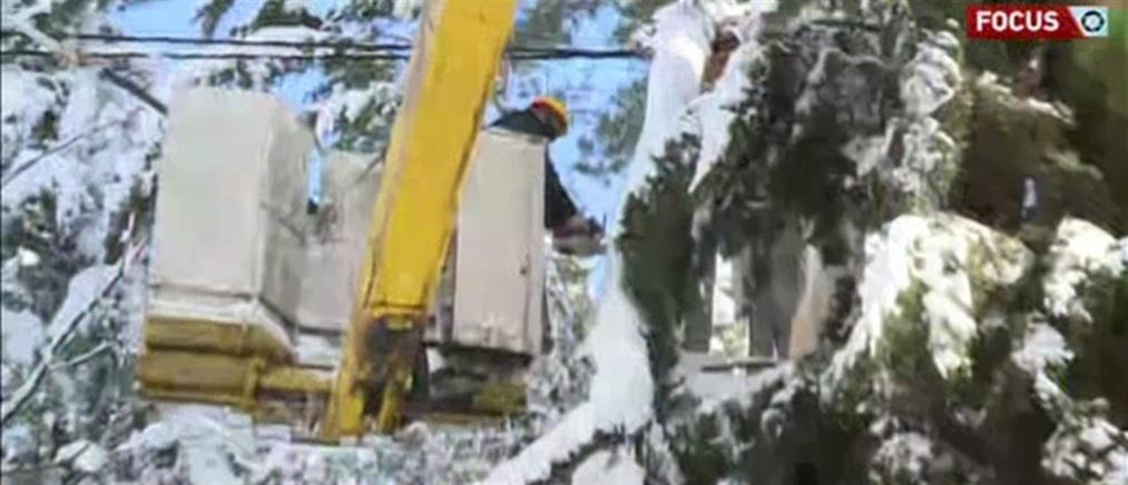 Η γραφειοκρατία μπλοκάρει και τις… κοπές δέντρων (βίντεο)