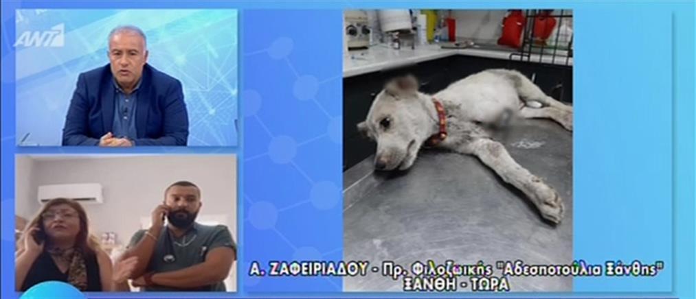 Έκκληση για το σκυλάκι που του έκοψαν πόδι και αυτιά (βίντεο)