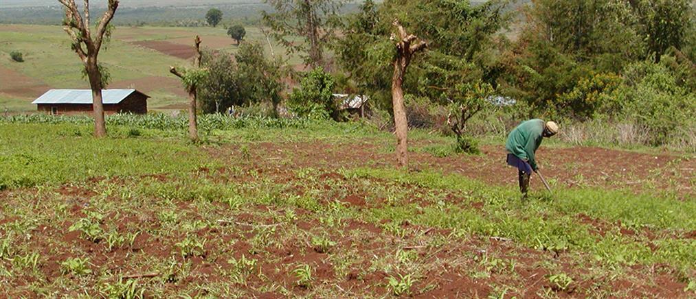 ΕΛΓΑ: Αποζημιώσεις 29 εκ. ευρώ σε αγρότες
