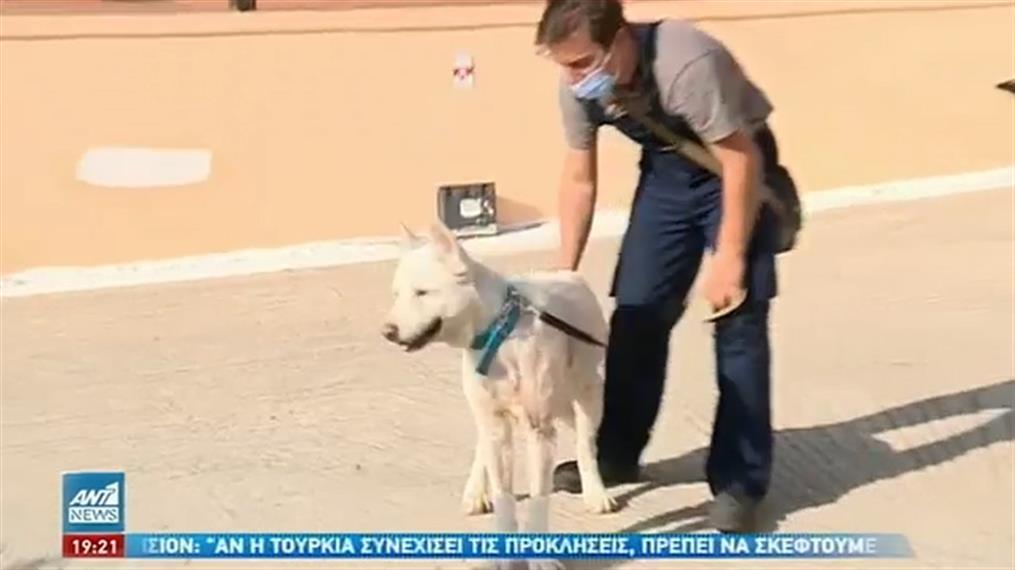 Στο σπίτι του επέστρεψε ο κακοποιημένος σκύλος, Έκτορας