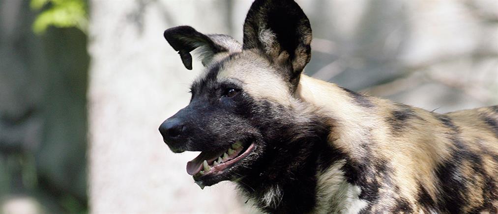 """""""Έφαγε"""" πρόστιμο 500 ευρώ γιατί… γάβγιζε το σκυλί του (εικόνα)"""