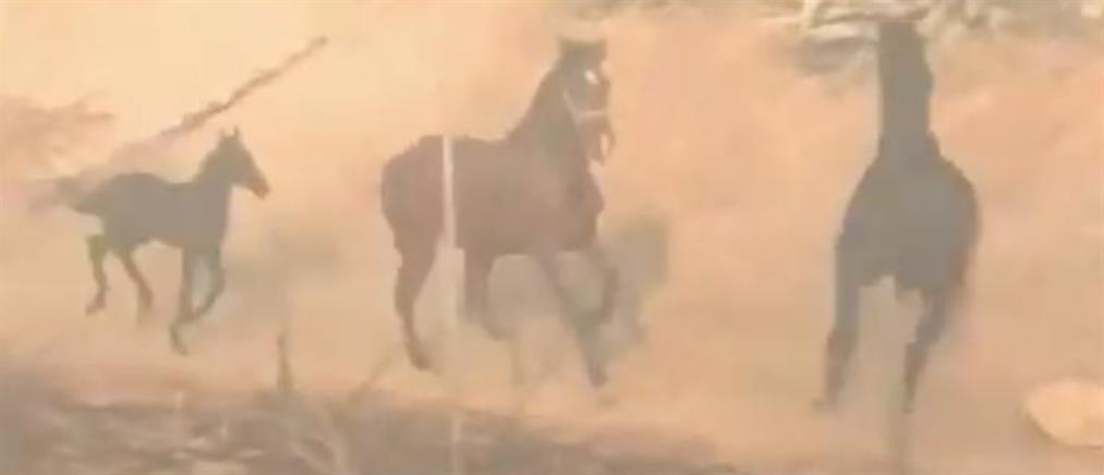 Το άλογο που γύρισε στην φωτιά για να σώσει την οικογένειά του (βίντεο)
