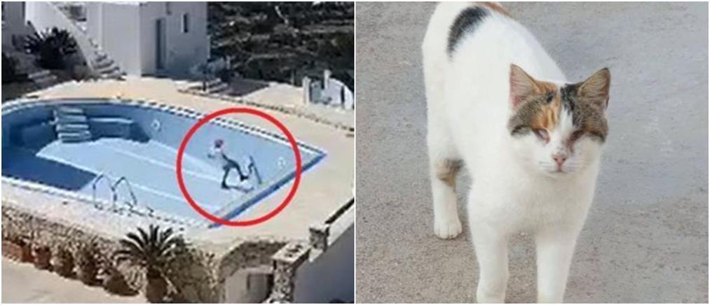"""Μαθητές Δημοτικού βασανίζουν μέχρι """"θανάτου""""  μια τυφλή γάτα (βίντεο)"""