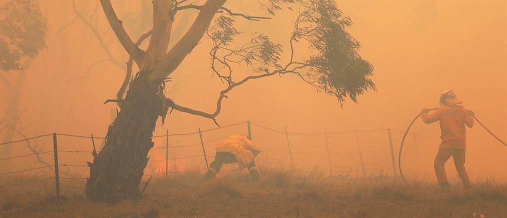 Αυστραλία: Νεκροί, απανθρακωμένα ζώα και καύσωνας