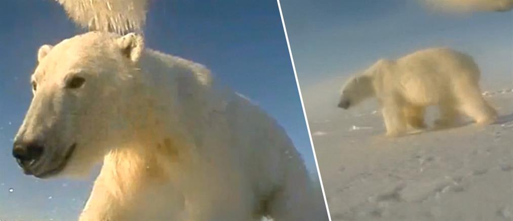 Η καθημερινότητα των πολικών αρκούδων στην Αλάσκα μέσα από τα μάτια τους (βίντεο)