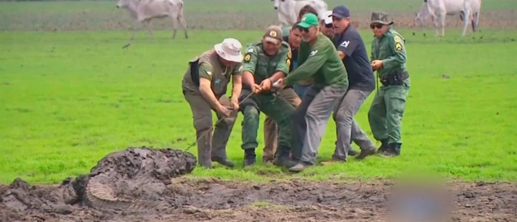 Δραματική διάσωση άγριων ζώων από την ξηρασία (βίντεο)