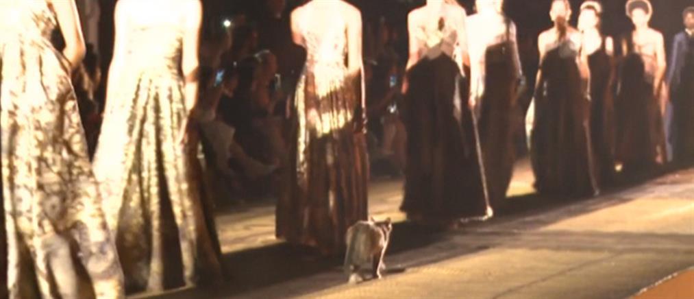 Γάτα έκανε… πασαρέλα στο Μαρόκο (βίντεο)