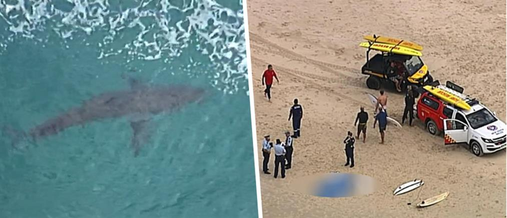 Νεκρός σέρφερ από επίθεση καρχαρία