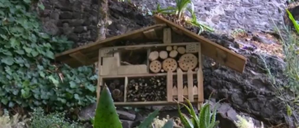 """""""Ξενοδοχείο"""" για έντομα σώζει τη διατροφική αλυσίδα (βίντεο)"""