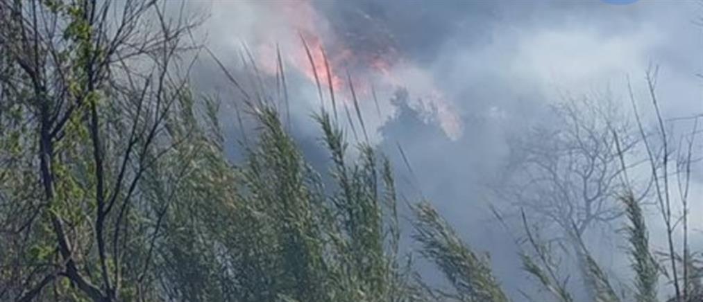 Φωτιά στη Ρόδο (εικόνες)