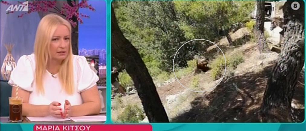 """""""Άγριες Μέλισσες"""": η σκηνή με την Μαρία Κίτσου και την πτώση στον γκρεμό (βίντεο)"""