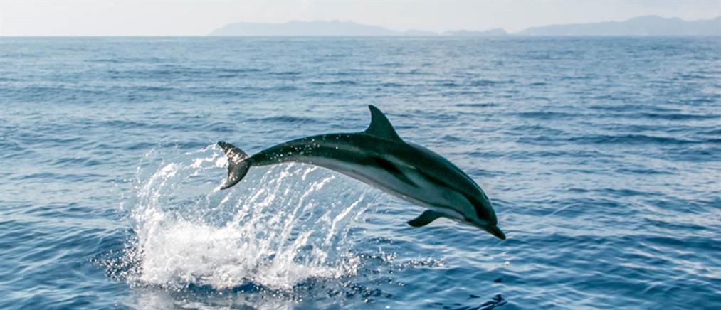 """Απίστευτο βίντεο από την Κορινθία: δεκάδες δελφίνια """"χορεύουν"""" στο νερό"""