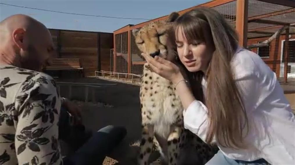 Ρωσία: Ζευγάρι υιοθέτησε πούμα και μένουν μαζί