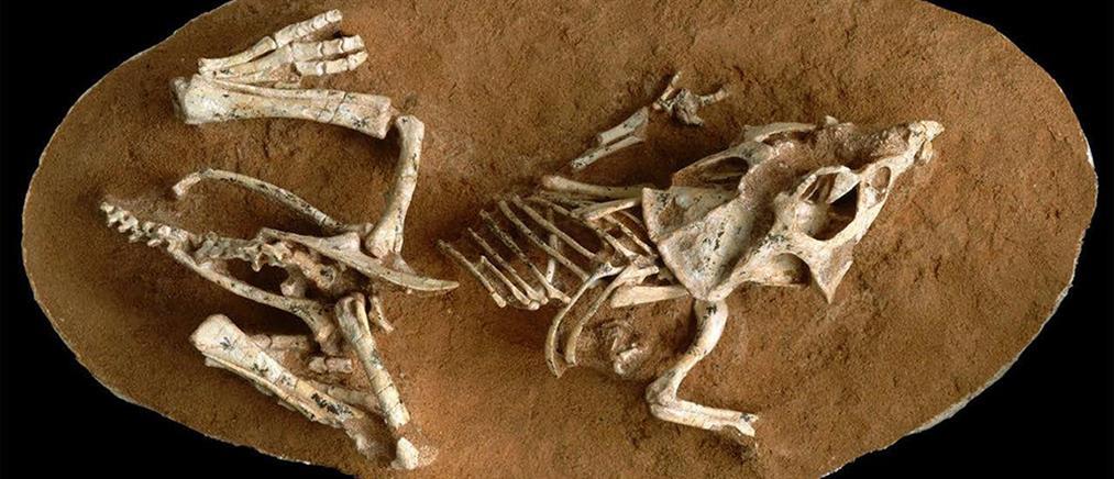 Οι δεινόσαυροι εξαφανίστηκαν από έναν αστεροειδή που έπεσε στην Γη