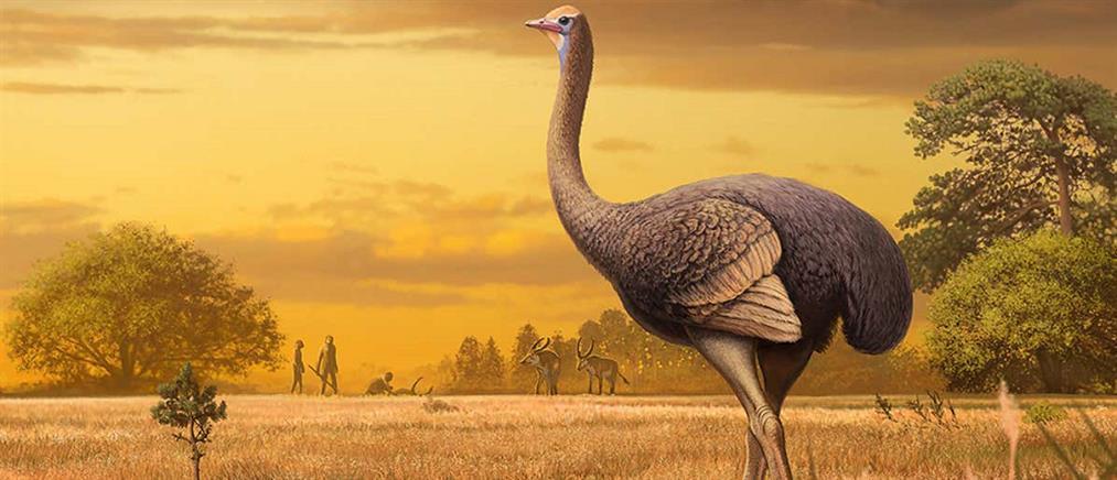 Απολιθώματα τεράστιων πουλιών ανακαλύφθηκαν σε σπήλαιο στην Κριμαία