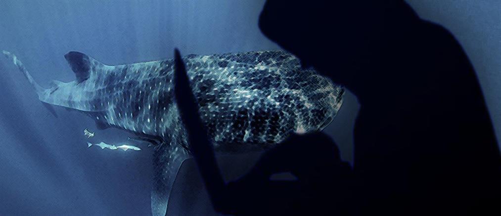 """Παρέμβαση της Εισαγγελέως του Αρείου Πάγου  για την """"Μπλε Φάλαινα"""""""