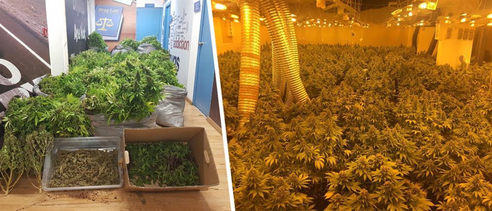 """""""Μεγάλωναν"""" δενδρύλλια κάνναβης σε υπερσύγχρονο φυτώριο υδροπονικής καλλιέργειας (εικόνες)"""