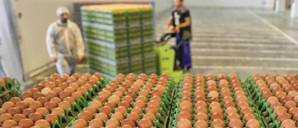 """Χιλιάδες """"ελληνοποιημένα""""... αβγά εντόπισε το ΣΔΟΕ"""