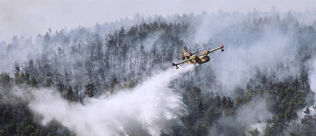 Φωτιά στα Βίλια - Χρυσοχοΐδης: από την πρώτη στιγμή εκτελείται ένα συγκεκριμένο σχέδιο