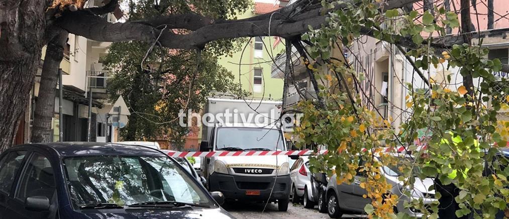 Κακοκαιρία - Θεσσαλονίκη: Καταστροφές και πτώσεις δέντρων (εικόνες)
