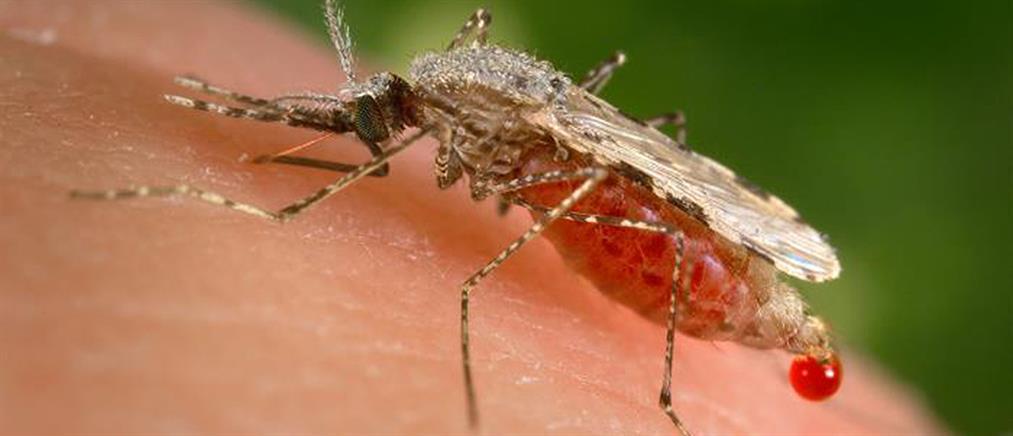 """""""Καμπανάκι"""" για τον ιό του Δυτικού Νείλου"""