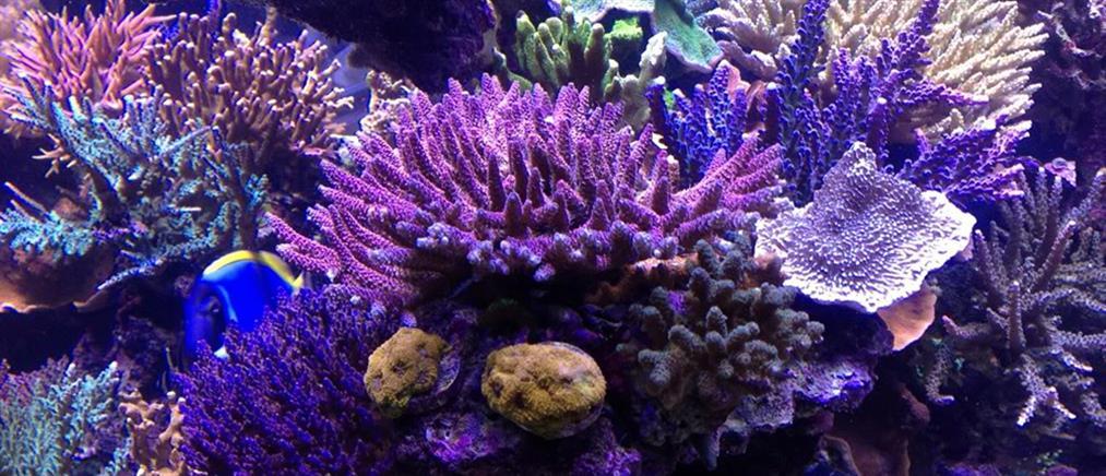 Επιδημία σκοτώνει τα κοράλλια