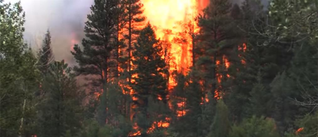 Μάχη με τις φλόγες στο Μαρμάρι Ευβοίας