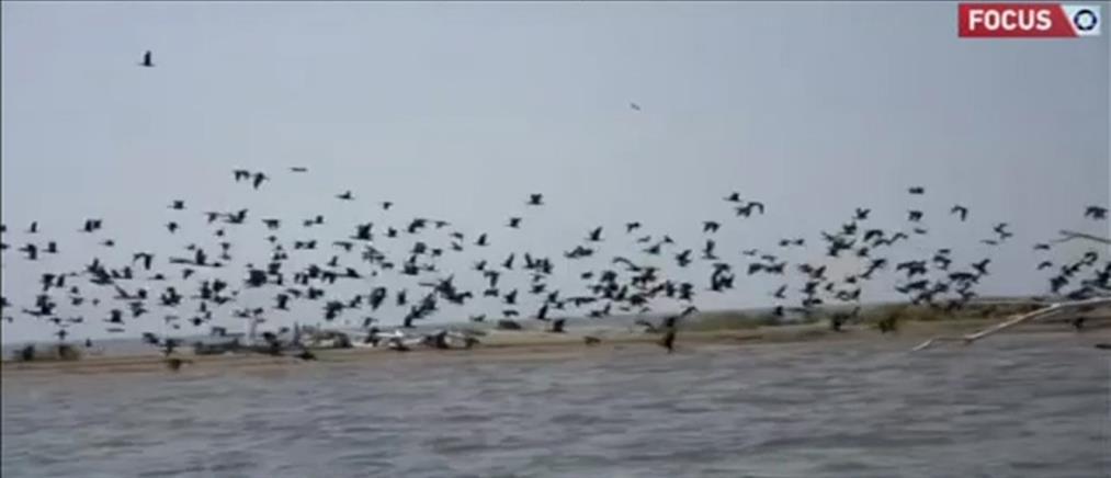 """Δέλτα του Έβρου: """"SOS"""" εκπέμπει το """"καταφύγιο"""" για χιλιάδες πουλιά (βίντεο)"""