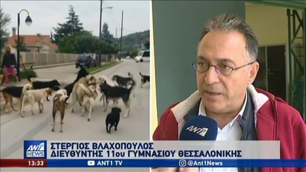 Κατάληψη για τα αδέσποτα στη Θεσσαλονίκη