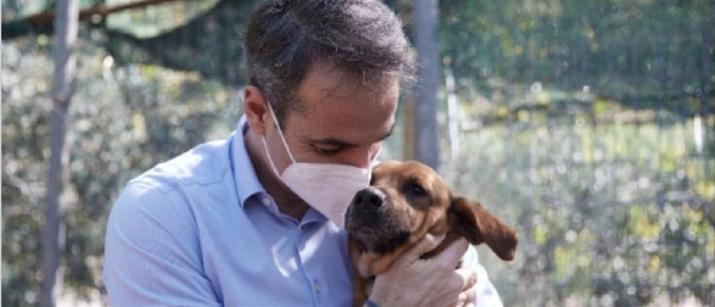 Μητσοτάκης: σε διαβούλευση το νομοσχέδιο για τα ζώα συντροφιάς