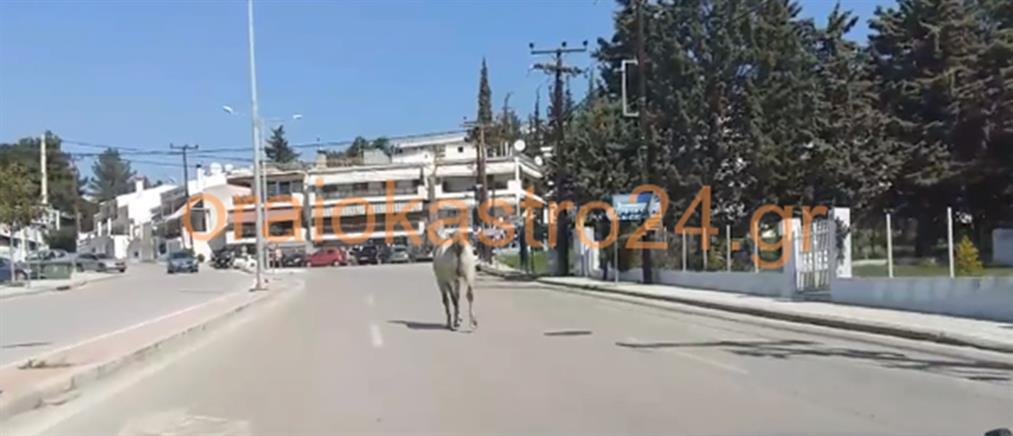 Ωραιόκαστρο: άλογο έκανε.. βόλτα στο δρόμο! (βίντεο)