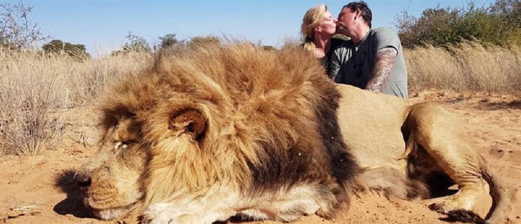 Οργή για το παθιασμένο φιλί μπροστά στο λιοντάρι που σκότωσαν (εικόνες)