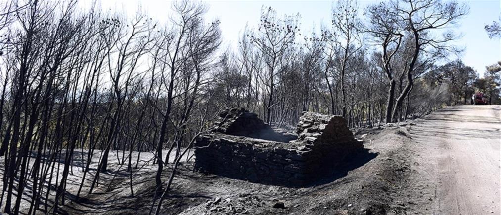Φωτιές στην Αττική: Ανησυχία για τις αναζωπυρώσεις στα Βίλια - Εμπρησμός στην Κερατέα