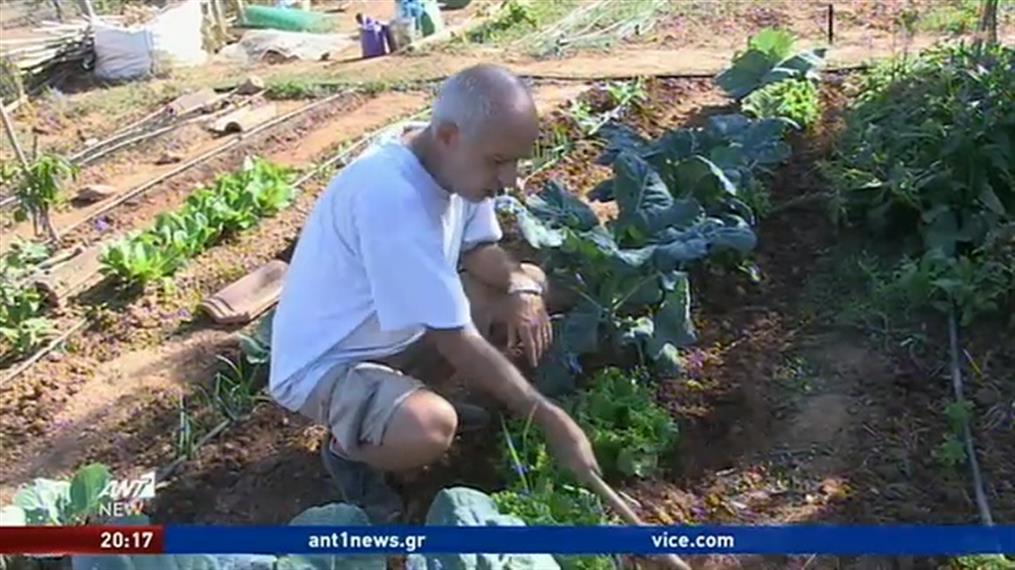 Αγρότες ενοικιάζουν χωράφια σε όσους θέλουν να αποκτήσουν δικό τους περιβόλι