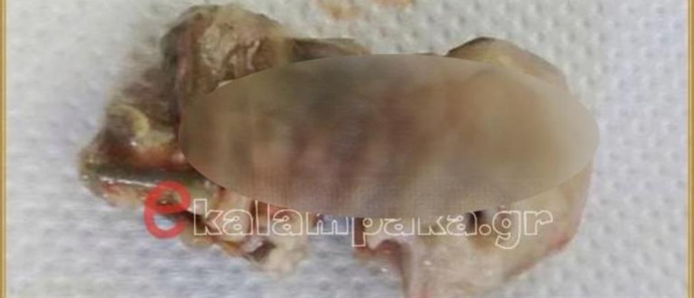 Θρίλερ με έμβρυο που βρέθηκε στο σώμα σκυλίτσας (εικόνες)