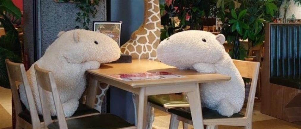 Κορονοϊός: Με λούτρινα ζωάκια στα τραπέζια τηρούν τις αποστάσεις σε εστιατόριο