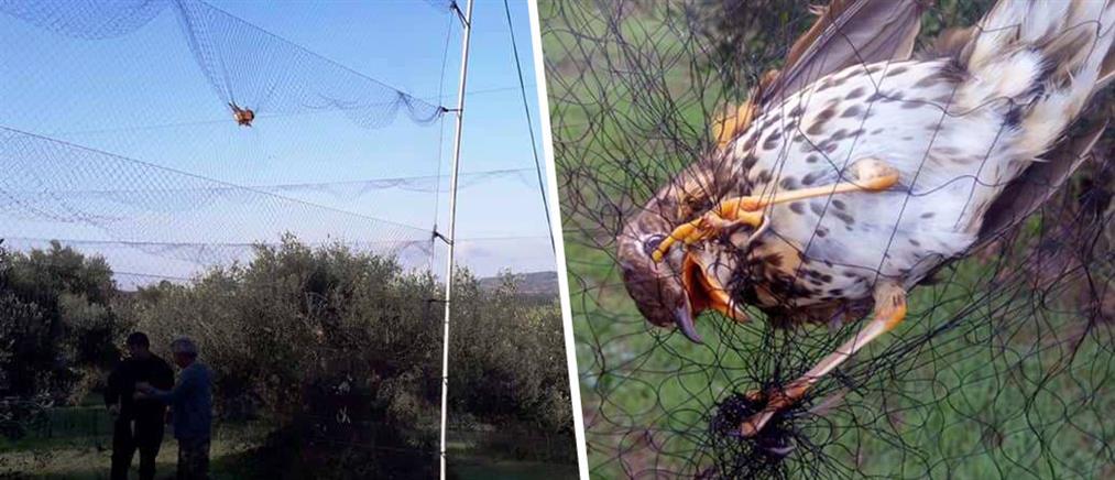 Παγίδευσαν πουλιά σε αόρατο δίχτυ (εικόνες)