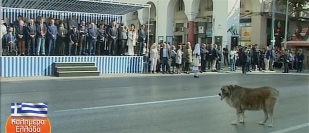 Ο σκύλος που έκλεψε την παράσταση στη μαθητική παρέλαση της Θεσσαλονίκης (βίντεο)