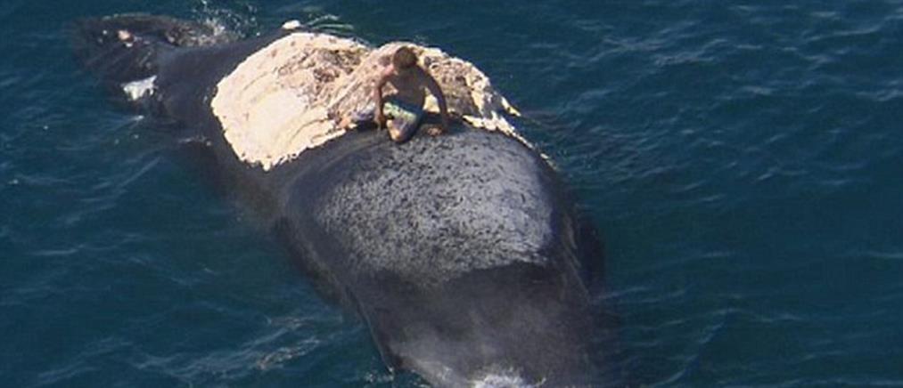 Πήδηξε πάνω σε κουφάρι φάλαινας, ενώ τον τριγύριζαν καρχαρίες!