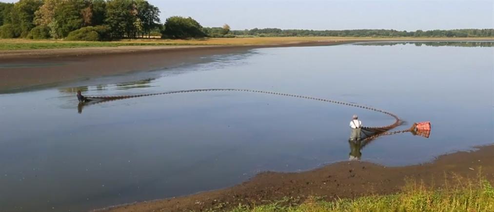 Με... κουβάδες σώζουν ψάρια από την ξηρασία (βίντεο)