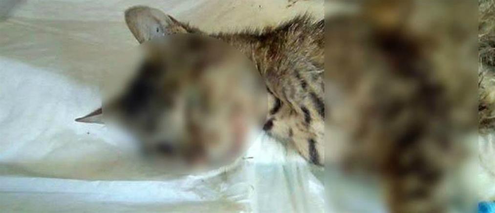Ασυνείδητοι σκότωσαν γάτα με αεροβόλο