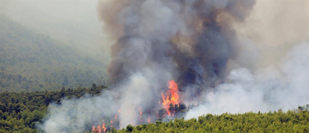 Φωτιά στη Βοιωτία
