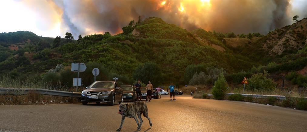 Δήμαρχος Διονύσου στον ΑΝΤ1: καίγονται σπίτια στο Κρυονέρι