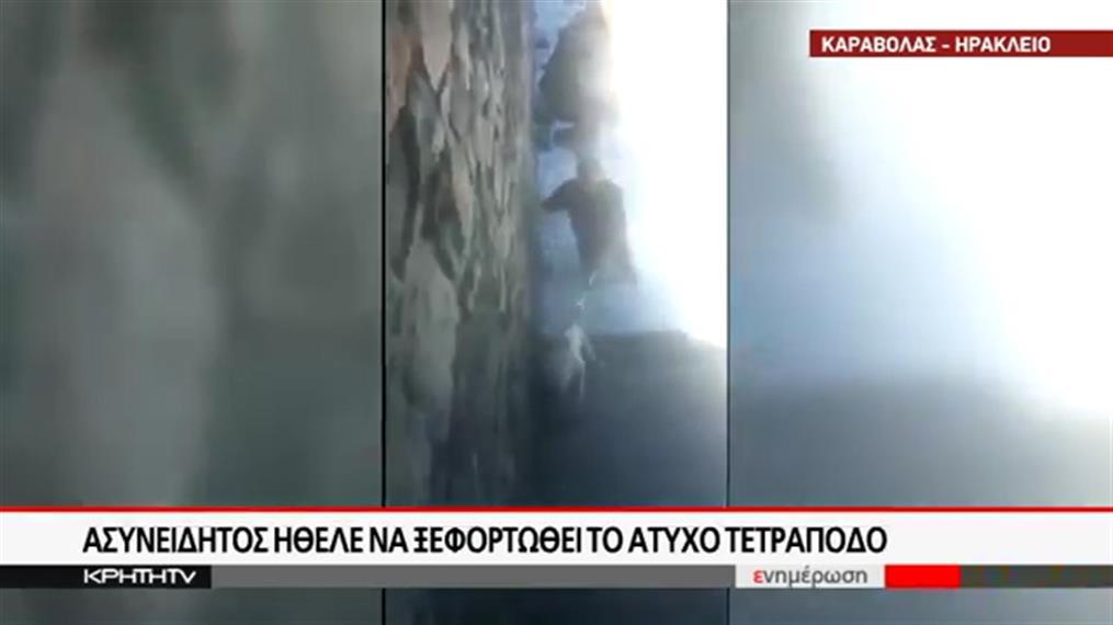 Κρήτη: Πέταξαν σκυλάκι στη θάλασσα