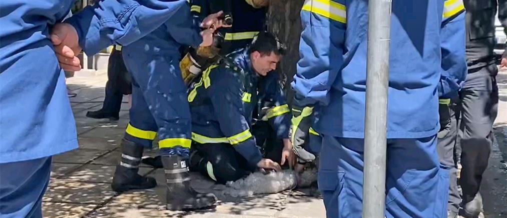 Θεσσαλονίκη: Πυροσβέστης κάνει ΚΑΡΠΑ σε σκύλο (βίντεο)