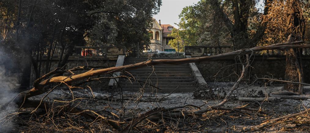 Φωτιά στο Τατόι - Μενδωνη: Επτά κτήρια υπέστησαν ζημιές (εικόνες)