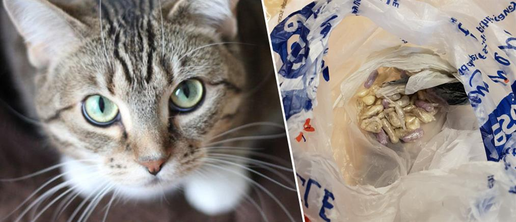 "9b7287fb16ea Γάτα με… αστυνομικό δαιμόνιο ""ξετρύπωσε"" ναρκωτικά"